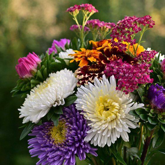 flowers-4415515_1920